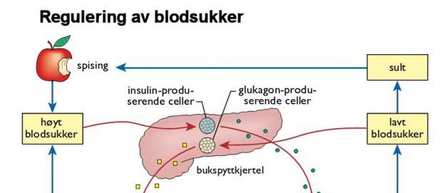 insulin i kroppen